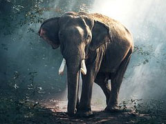 Movies about Elephants